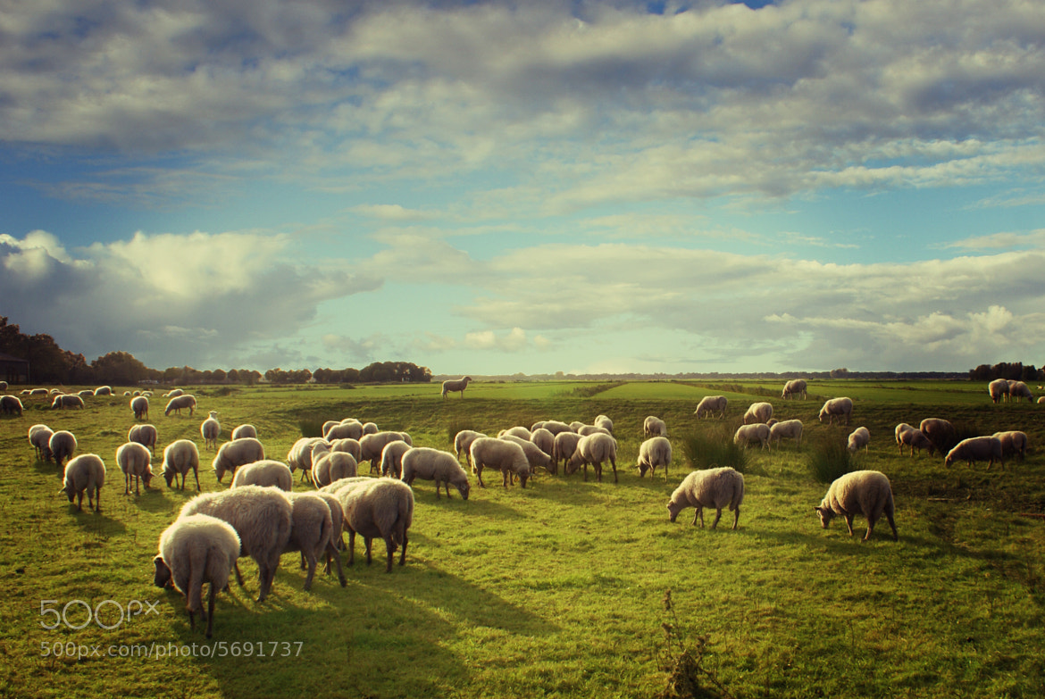 Photograph Rembrandt's country by op drie on 500px