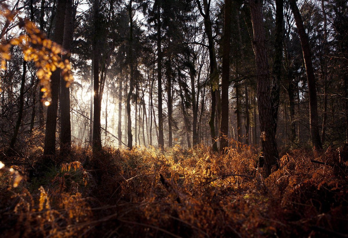 Photograph In the woods by Valentijn Tempels on 500px