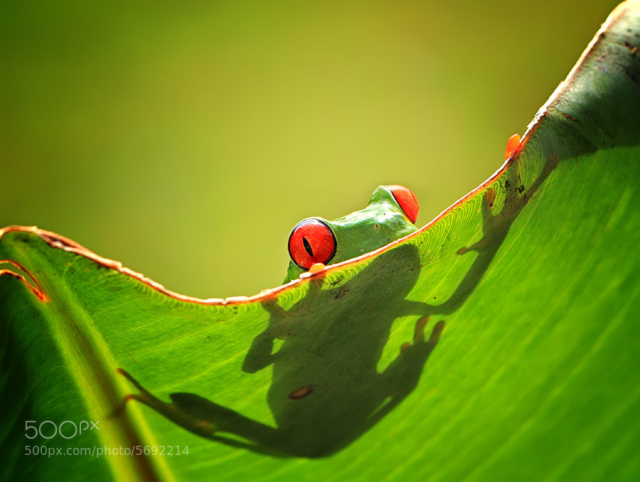 Photograph peek a boo by shikhei goh on 500px