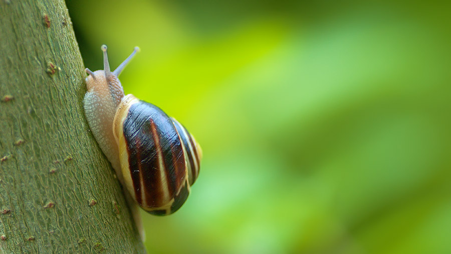 Photograph snail on the tramp by Manfred Huszar on 500px