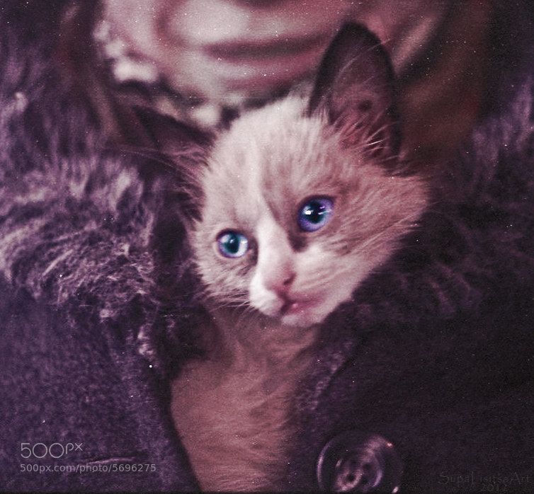 Photograph Cat in a coat by Valeriya Lisitsa on 500px