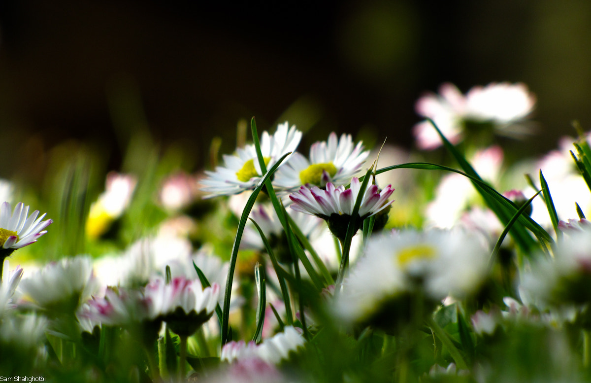 Photograph Spring Comes 03 by Sam Shah on 500px