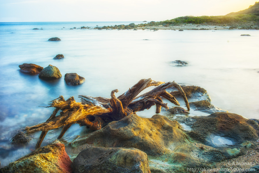 Place of arrival of driftwood