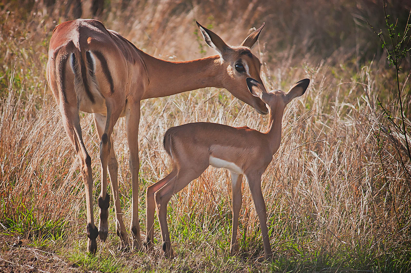 Photograph Bambi and His Mum by Jesús Villalba on 500px