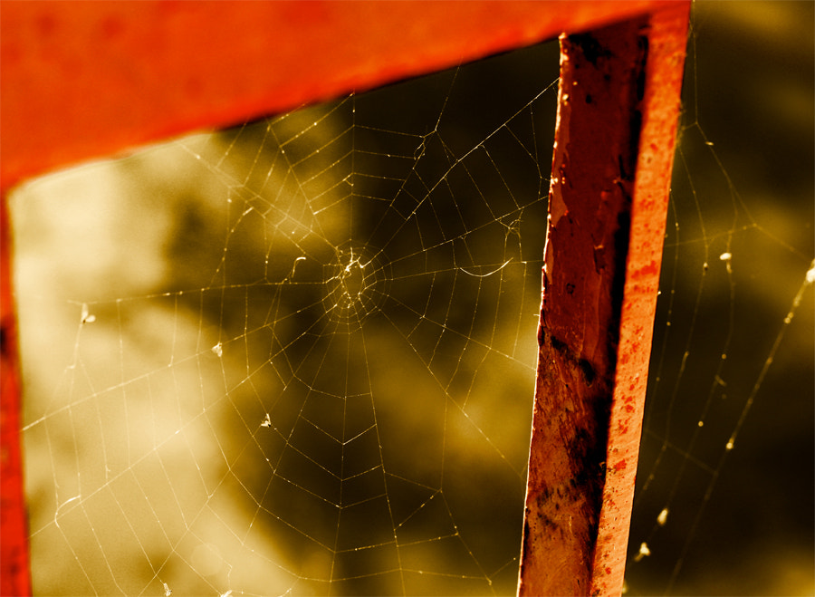 Photograph The web by Rich Bracken on 500px