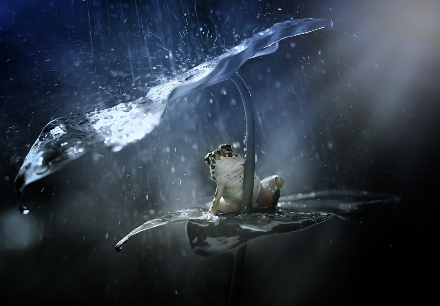 v2?webp=true&sig=d683599b1054473930e232bf9f4b5f5fa8bfbb19d9f379eb439c58ebcc9fc907 14 animaux avec leur parapluie naturel