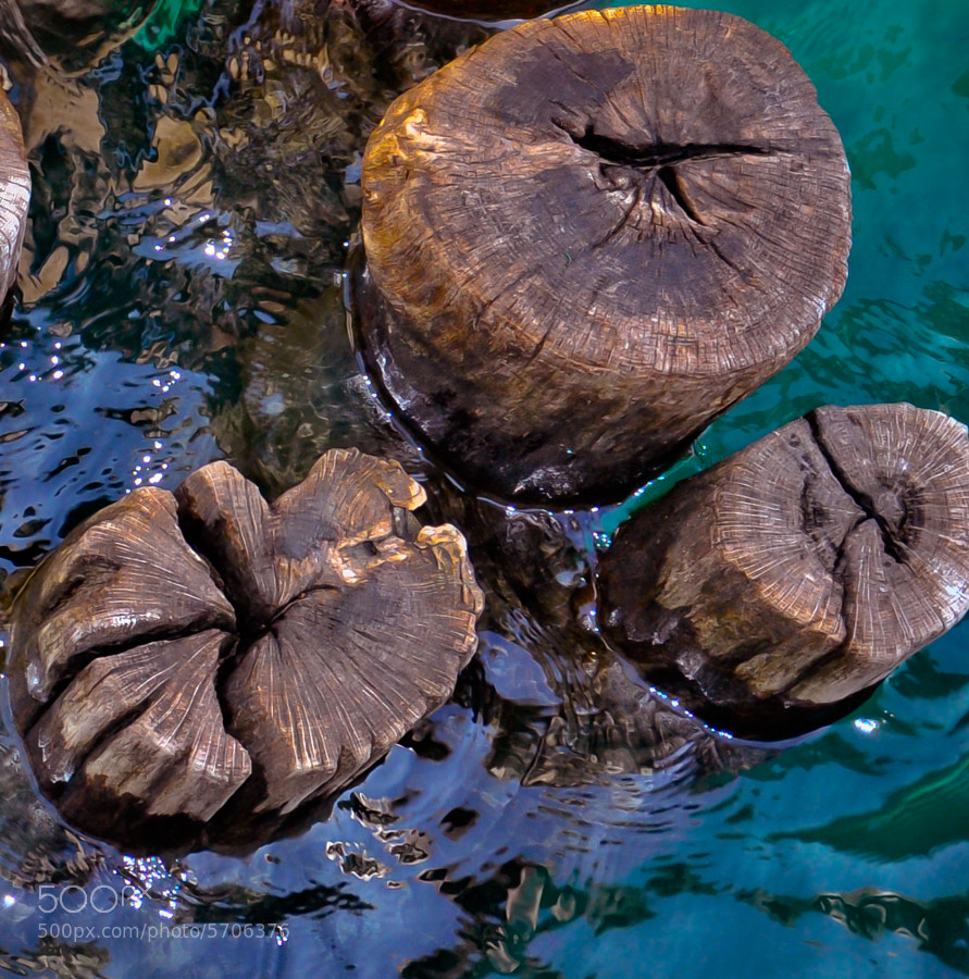 Logs used as part of a breakwater, St. Clair, Michigan
