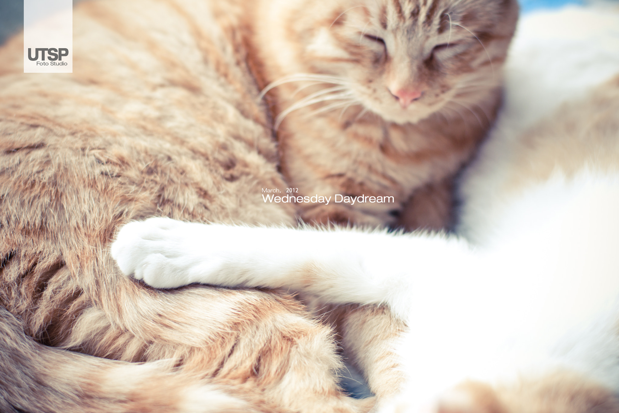 Photograph Kitty At Home by Teddy Ye on 500px