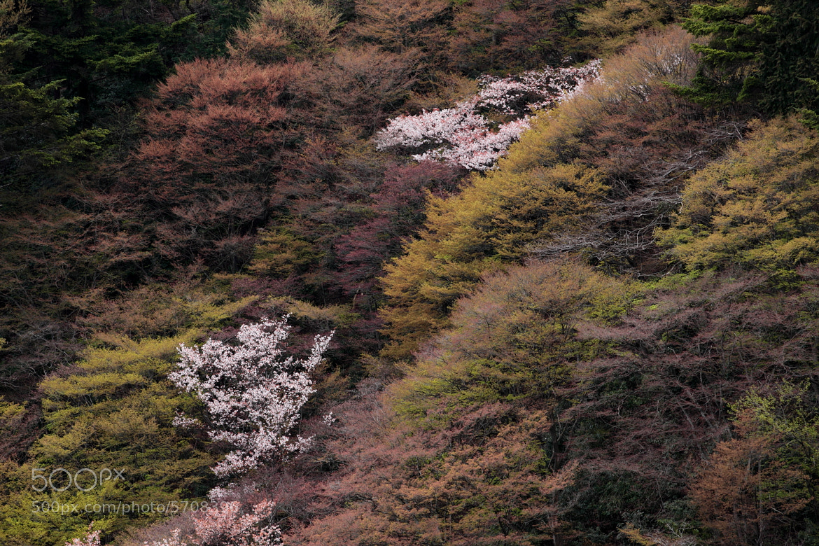 Photograph Nature's Tapestry by Ken Shimo on 500px