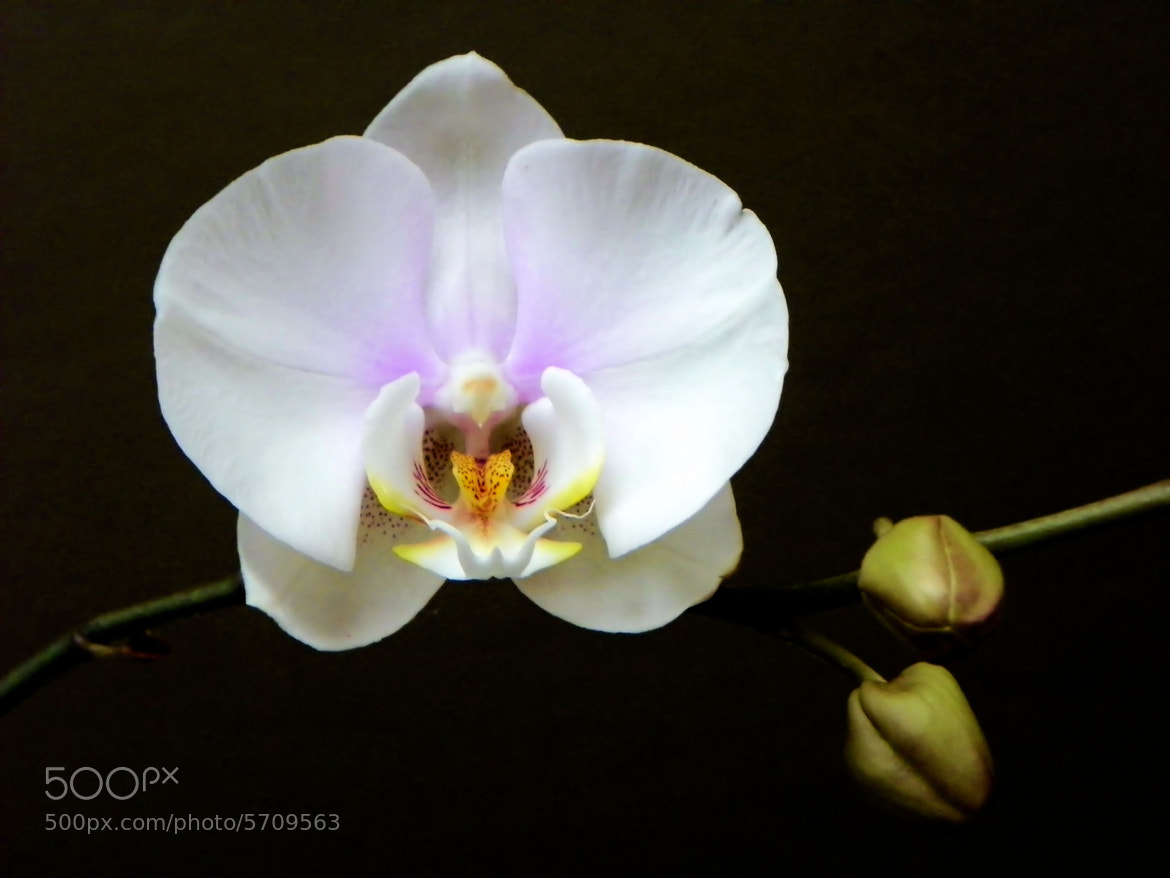 Photograph Orchid by Noel Zepeda on 500px