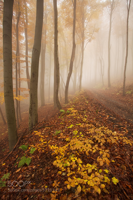 Photograph Misty Autumn by Martin Rak on 500px
