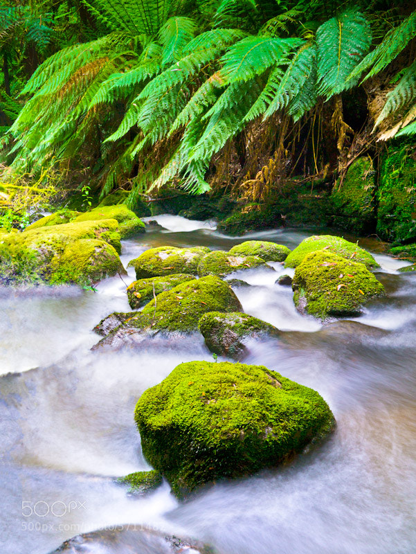 Photograph Toorongo River by raz has on 500px