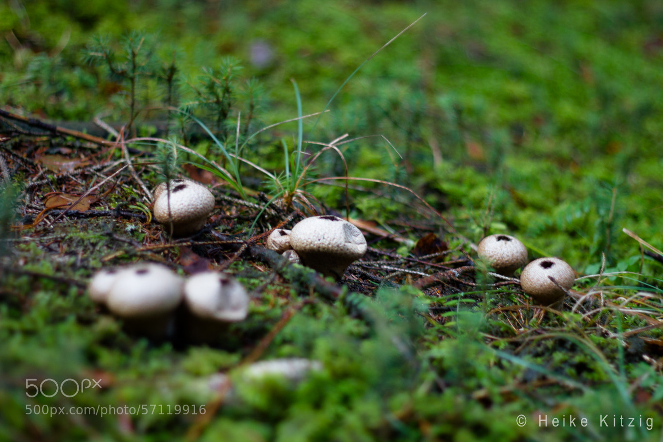 Photograph Mushrooms by Heike Kitzig on 500px