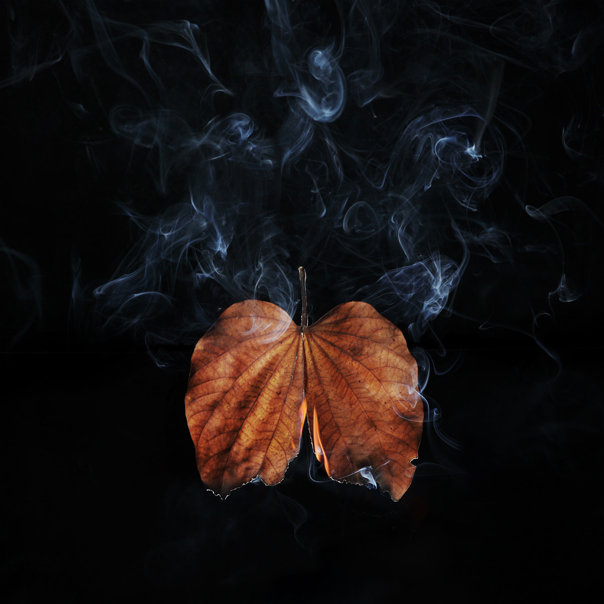 Photograph Stop burning leaves = Stop burning lungs. by Suphakaln Wongcompune on 500px