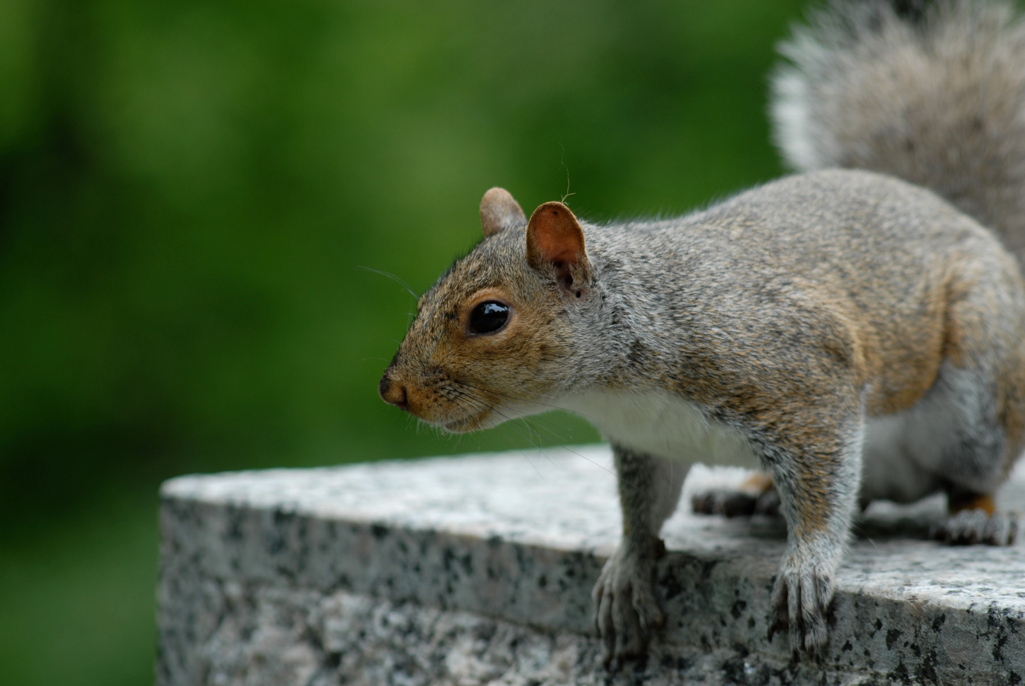 Photograph The posing squirrel by Gilles Royer on 500px