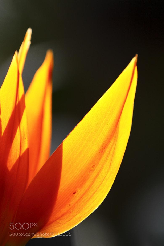 Photograph Warm flower by Hiroshi Oka on 500px