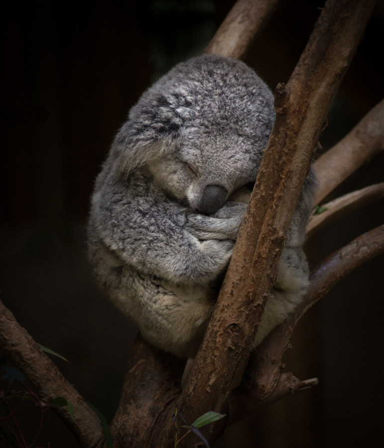 A Little Sleepy by T Dingle on 500px.com