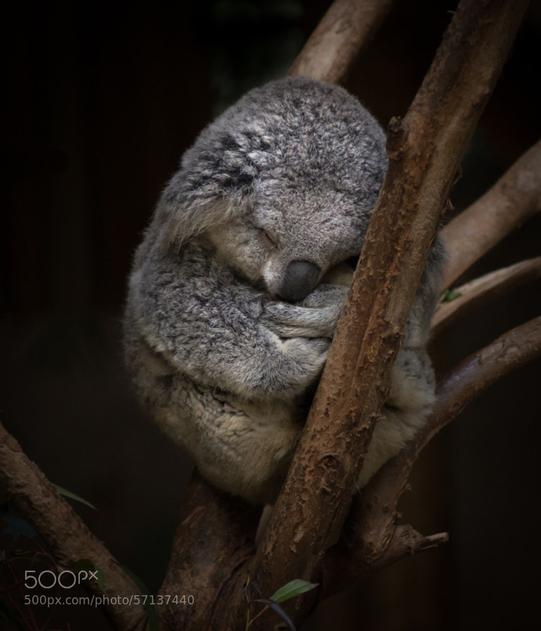 Photograph A Little Sleepy by T Dingle on 500px