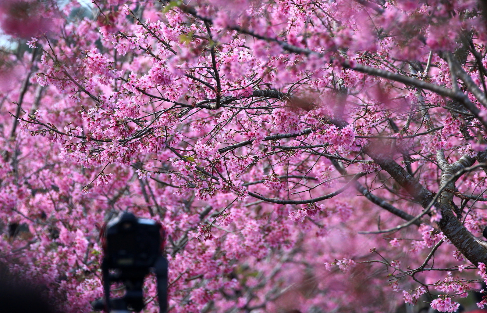 Photograph pink fever by Kay  on 500px