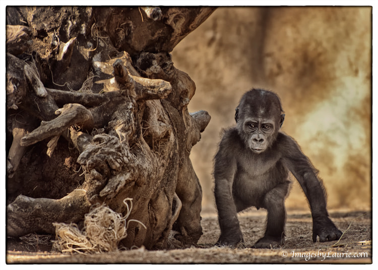 Photograph Baby Steps by Laurie Rubin on 500px