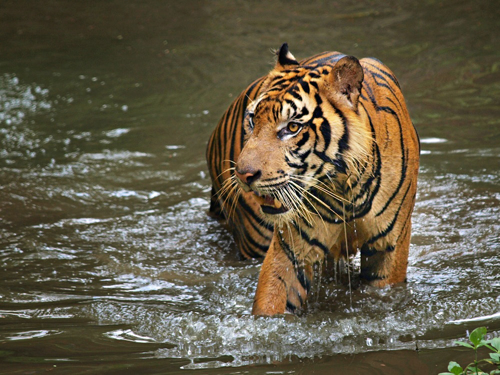 Photograph in the water by Irawan Subingar on 500px