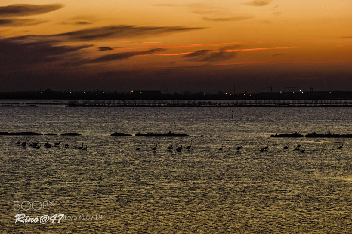 Photograph Flamingos at sunset by Gastone Dissette on 500px