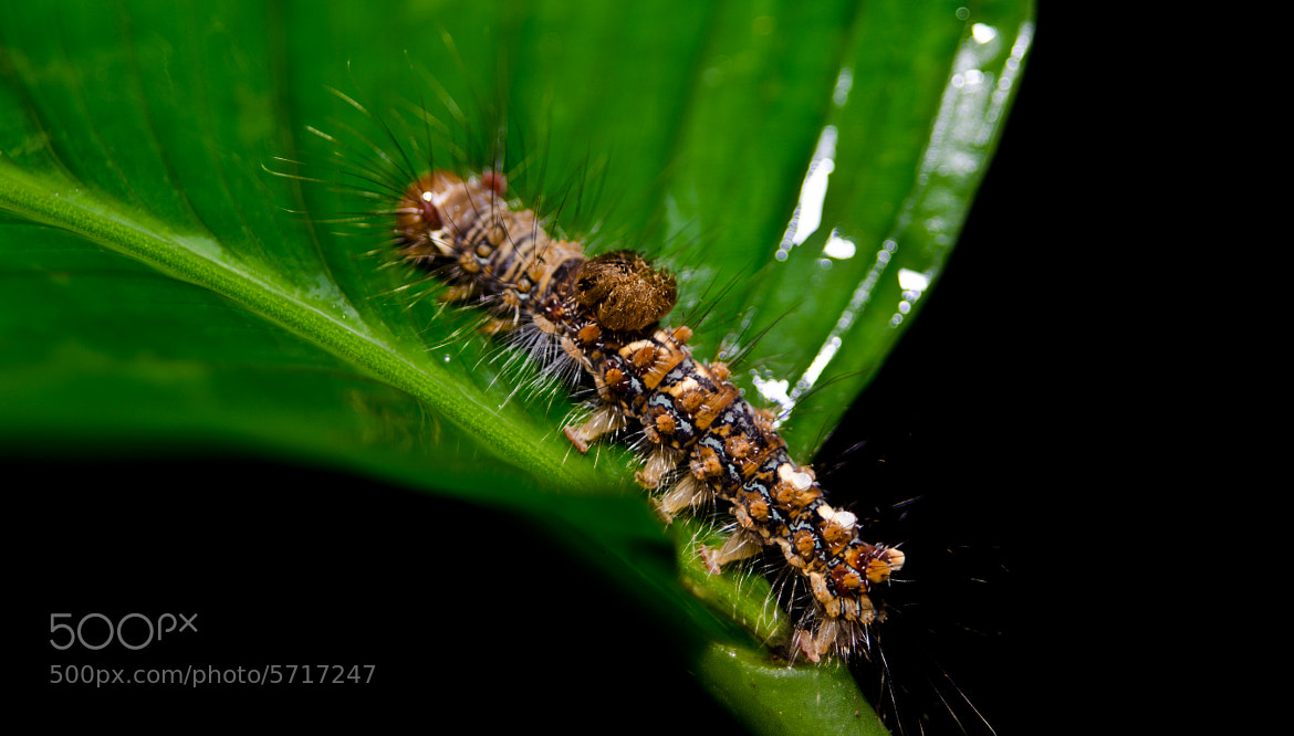 Photograph Caterpillar by Zul Hakim on 500px