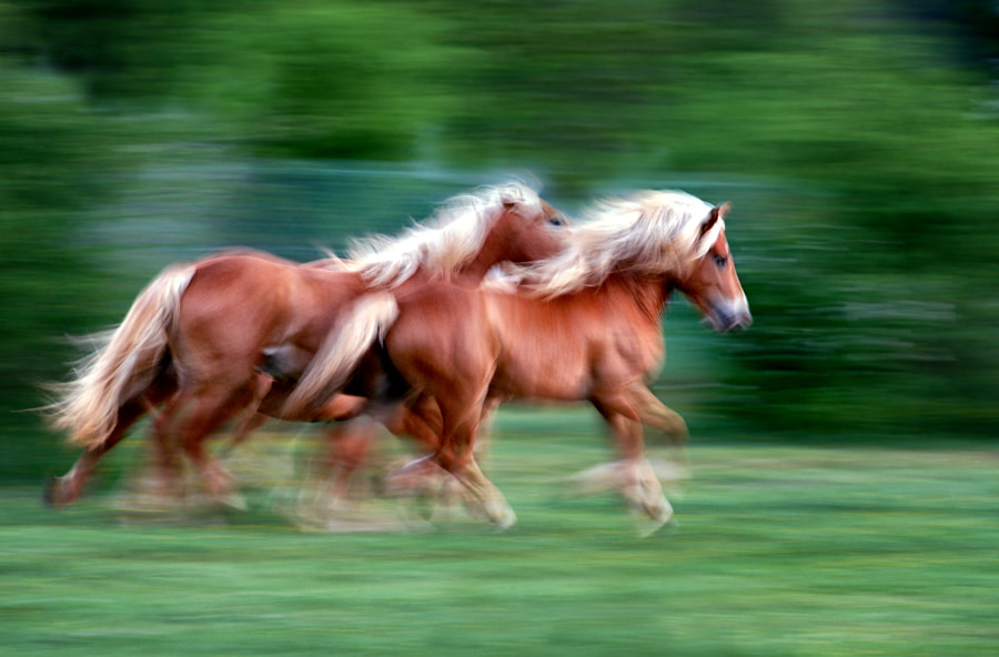 Photograph ... running horses by Carlo  Scherer on 500px