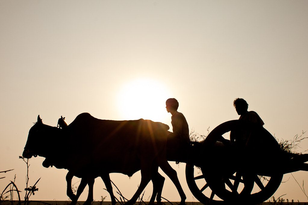 Photograph Bullock Cart by Tanushree Singh on 500px