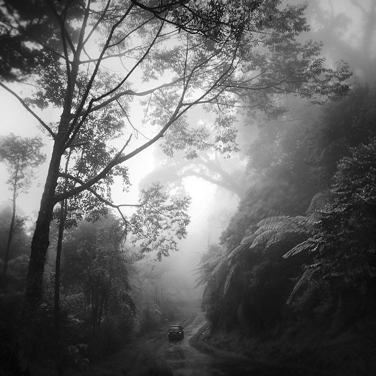 Photograph Rain Forest - West Java by Hengki Koentjoro on 500px