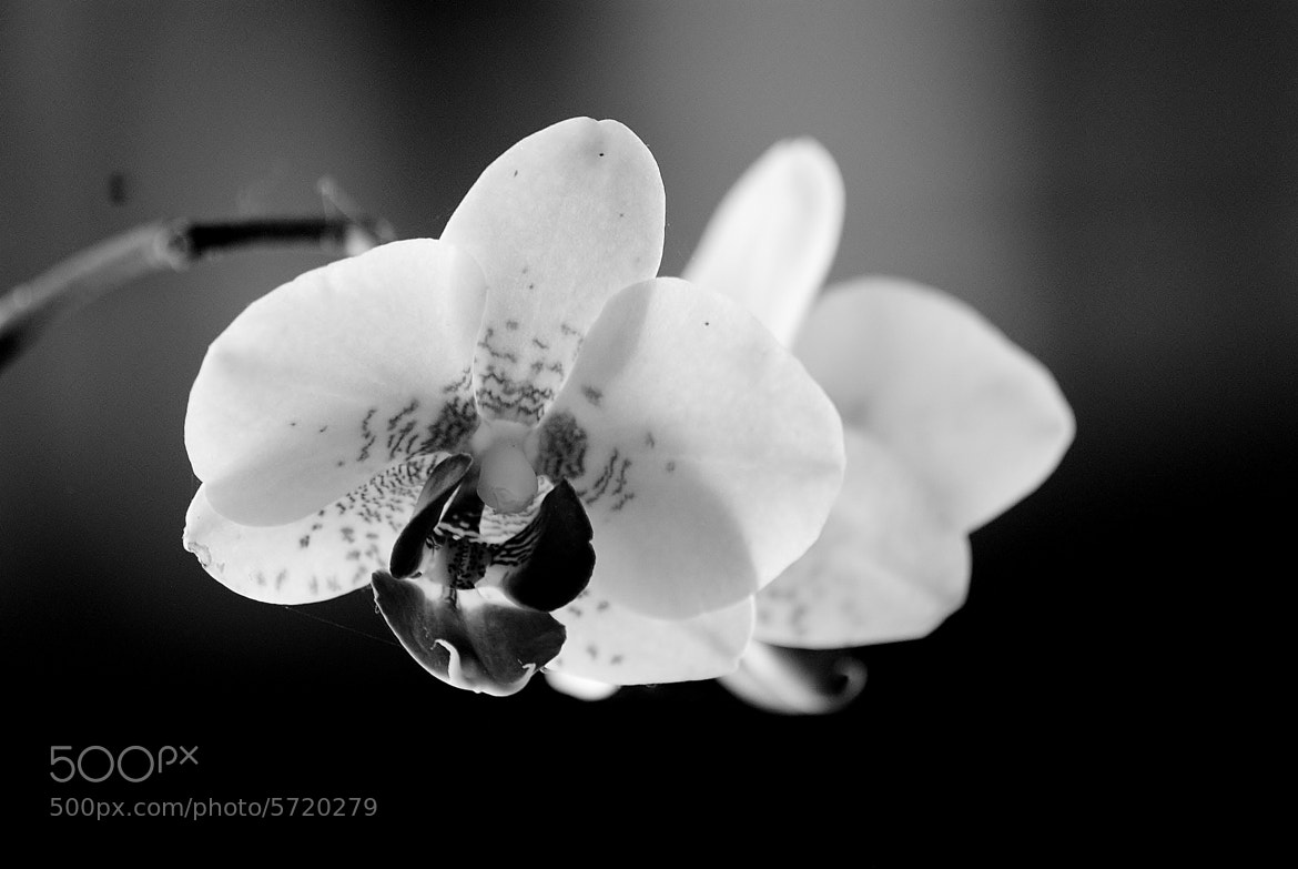 Photograph Old style orchid by Marie BALLEFIN on 500px