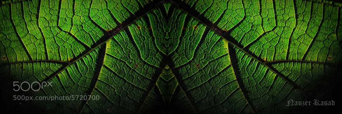 Photograph The Green House.. by Nauzer Kasad on 500px