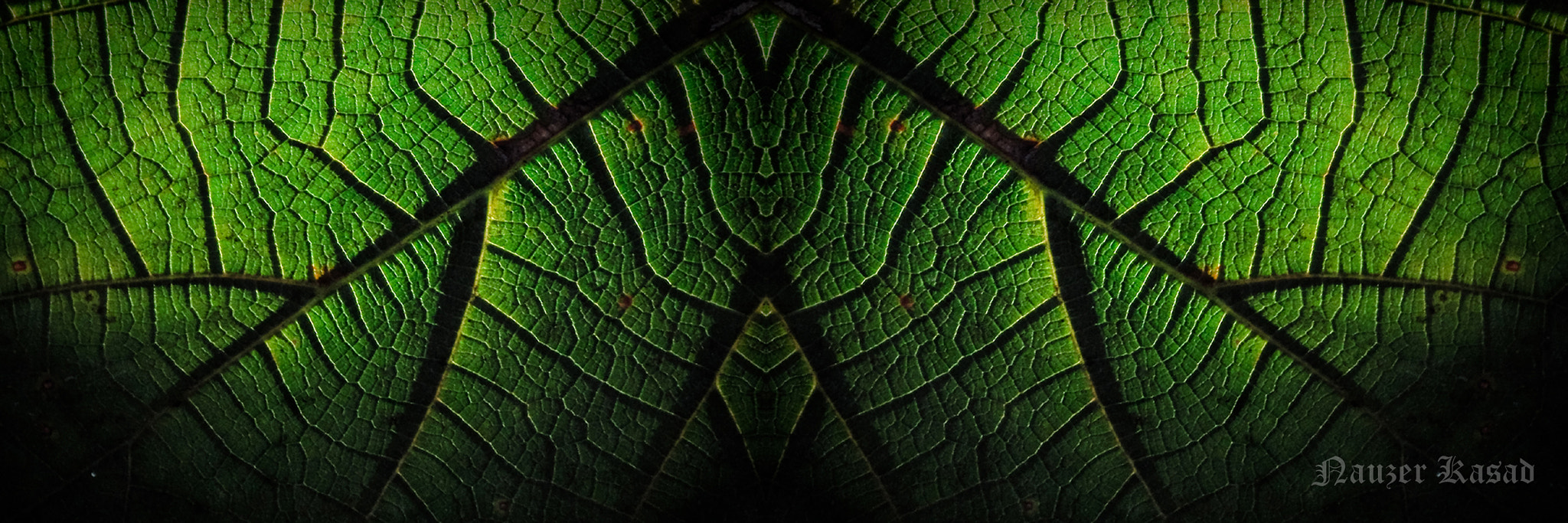 Photograph The Green House.. by Nozer Kasad on 500px