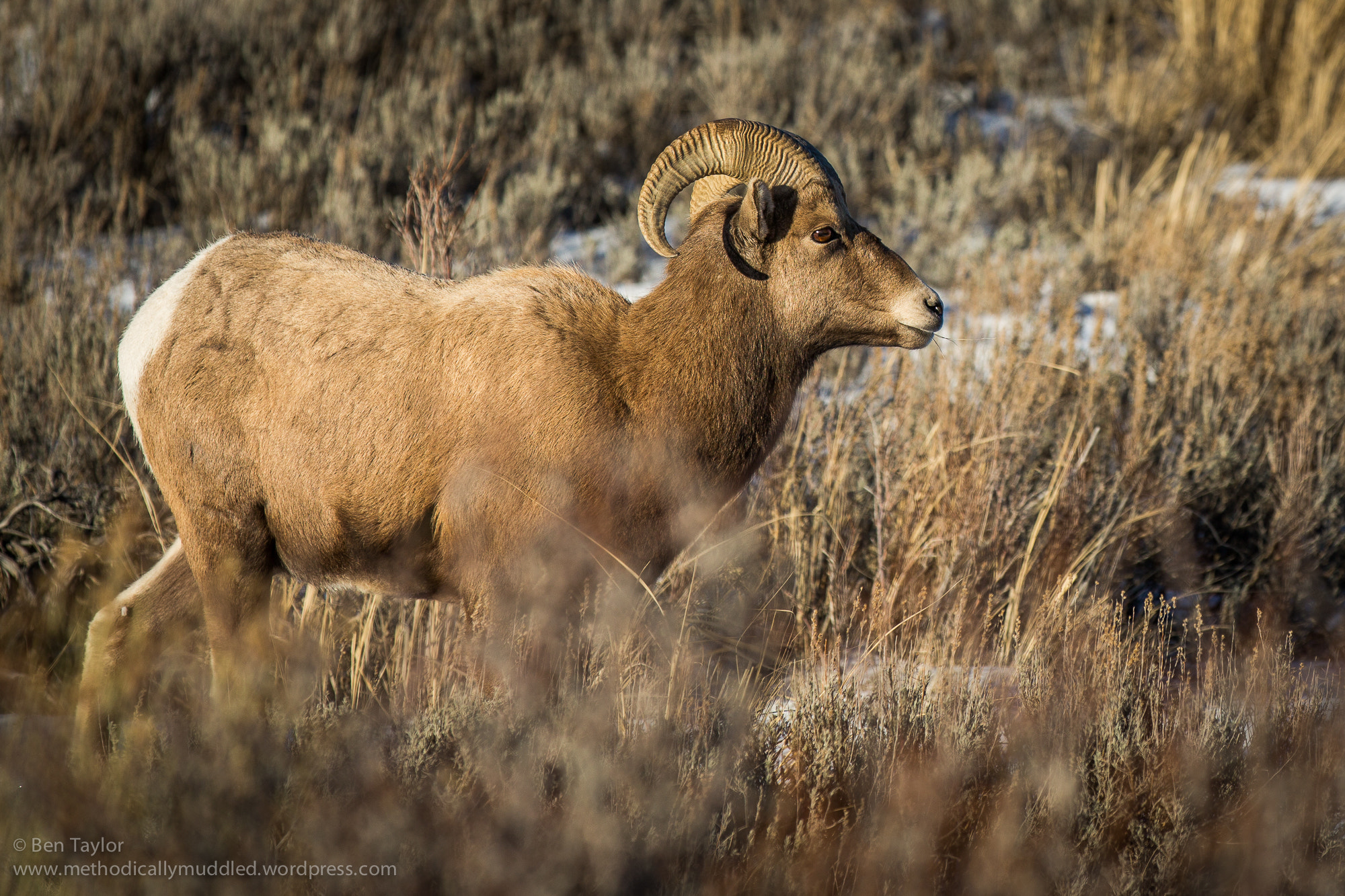 Photograph Big Horn by Ben Taylor on 500px