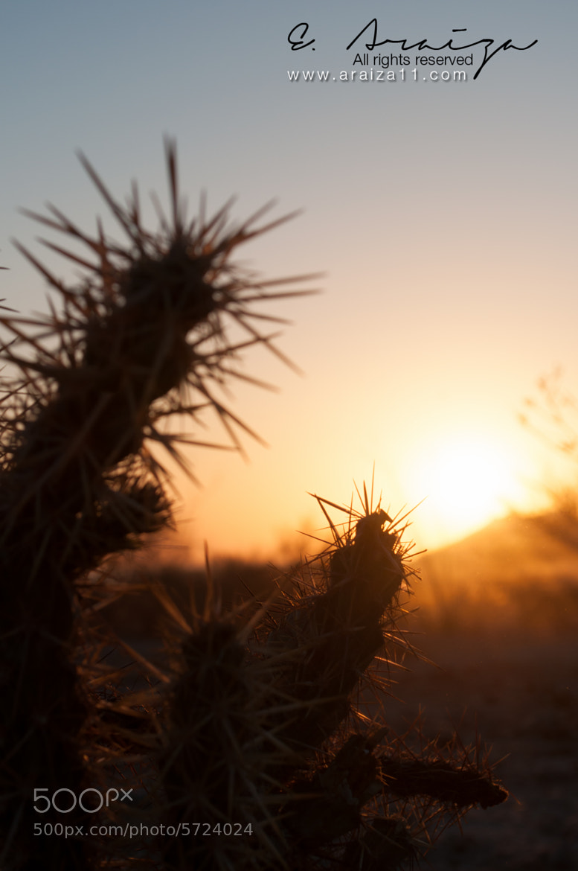 Photograph Good Morning! by E. Araiza on 500px