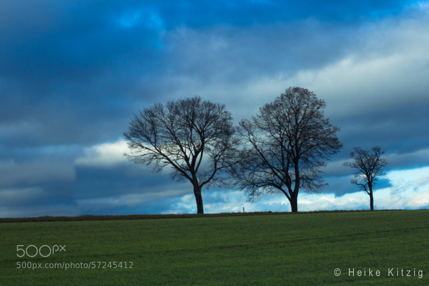 Photograph Trees by Heike Kitzig on 500px