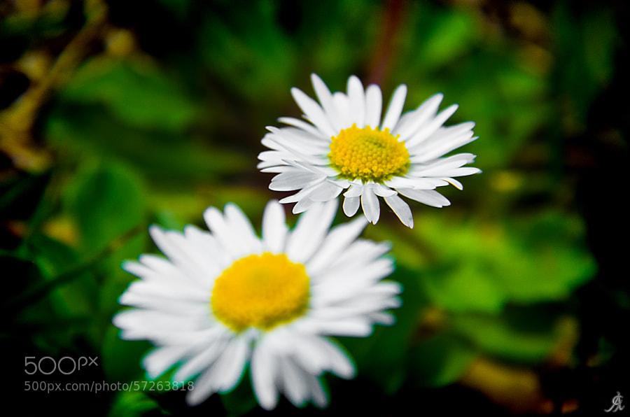"""<a href=""""http://www.alegiorgiartphoto.com"""" rel=""""nofollow"""">www.alegiorgiartphoto.com</a> <a href=""""https://www.facebook.com/alesgiorgi.artphotography"""" rel=""""nofollow"""">Become fan on FACEBOOK</a> <a href=""""https://twitter.com/AleGiorgi74"""" rel=""""nofollow"""">Follow me on TWITTER</a>"""