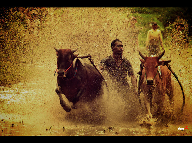 Photograph Traditional Race by Benjamin Pelawi on 500px
