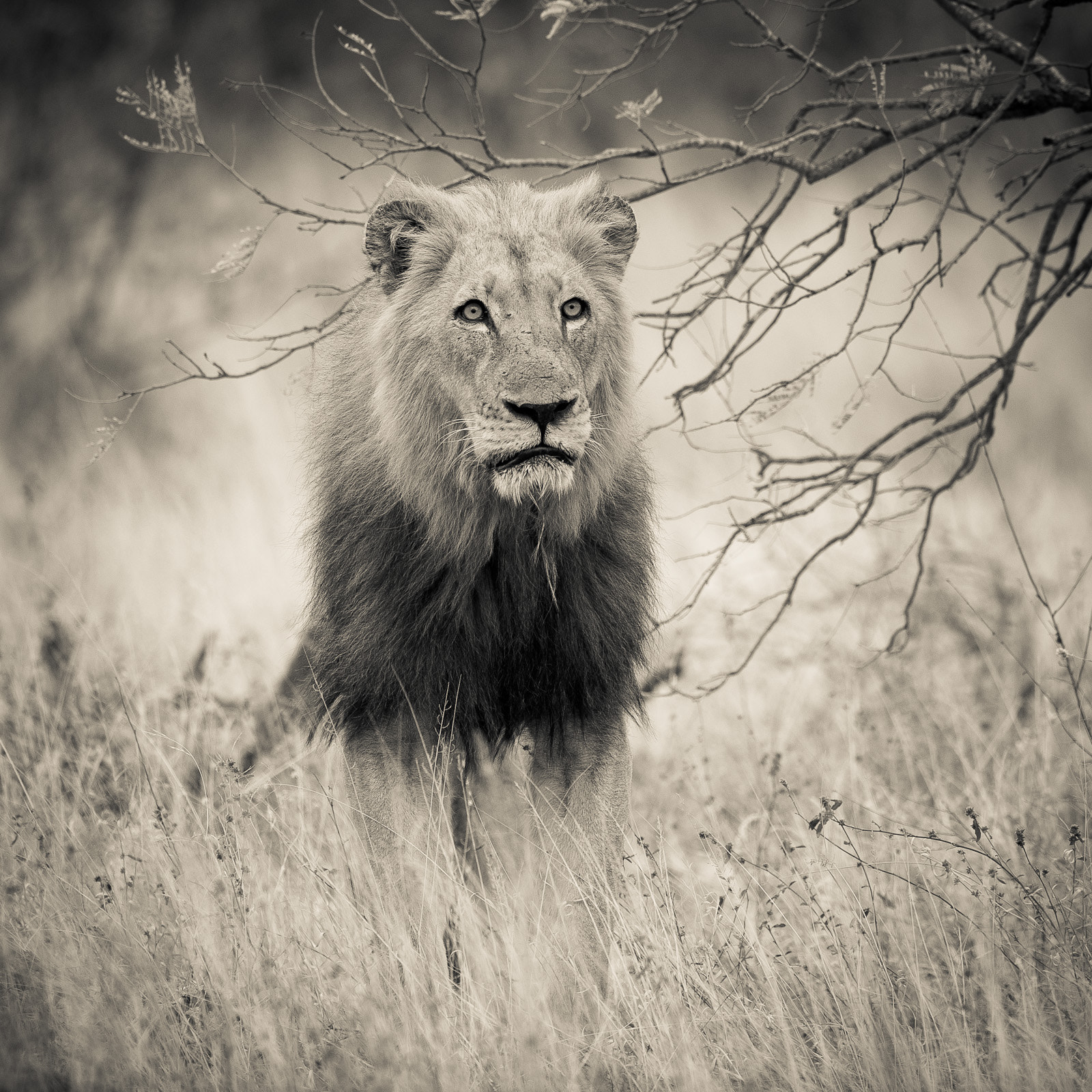 Photograph King by Gorazd Golob on 500px