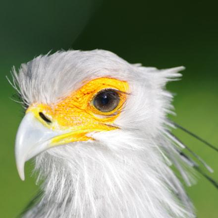 Sekretärvogel