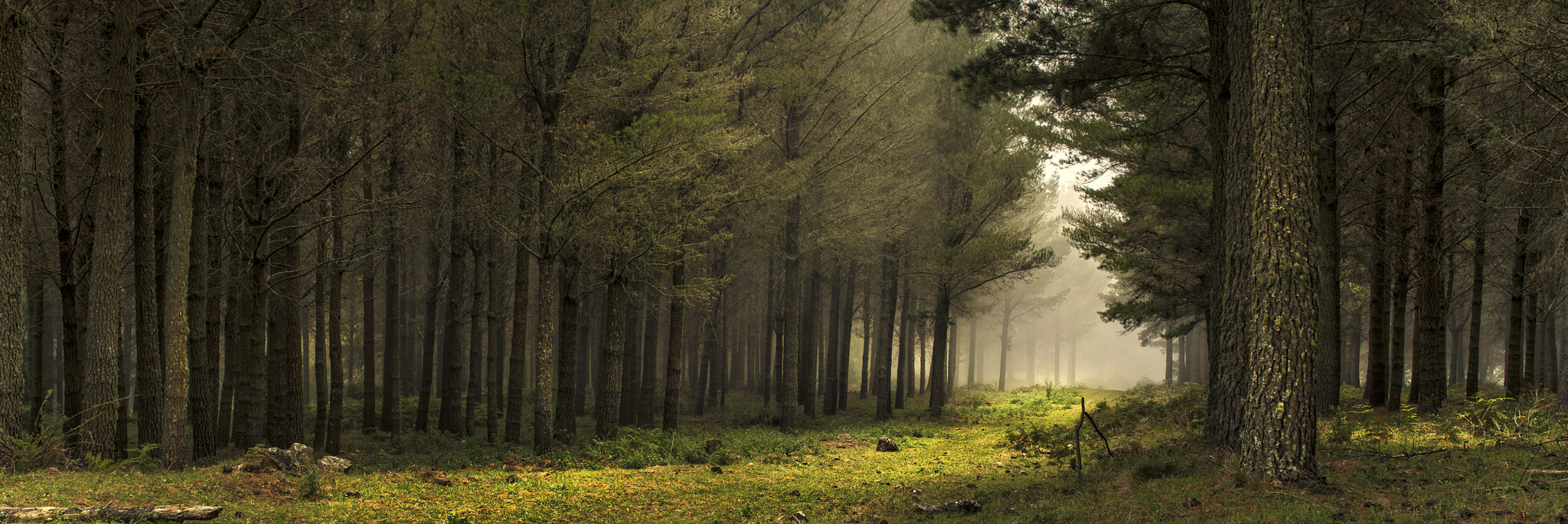 Photograph Walking With The Trees by Timothy Poulton on 500px