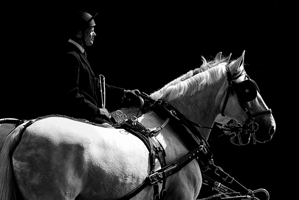 Photograph Royal harness by yves b on 500px