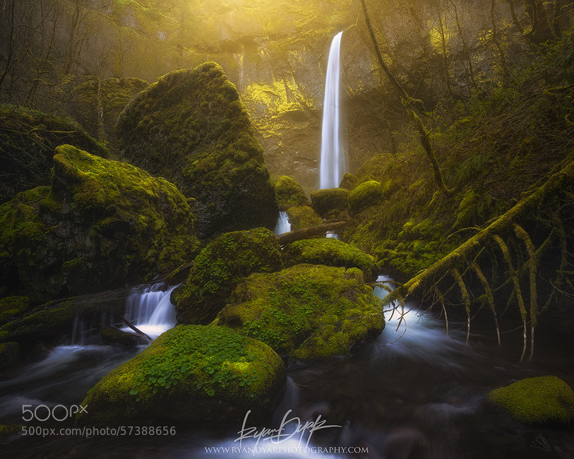 Photograph Open Canopy by Ryan Dyar on 500px