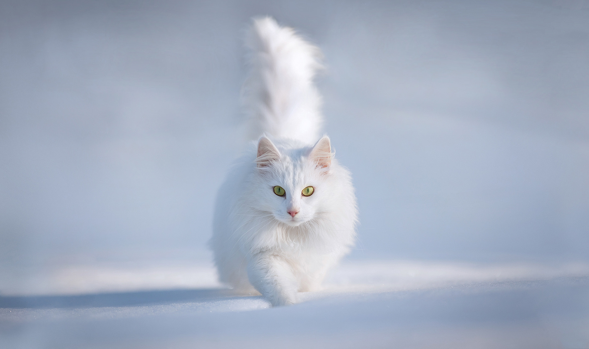 Photograph Yellow Eyes by Esmée Prexus on 500px