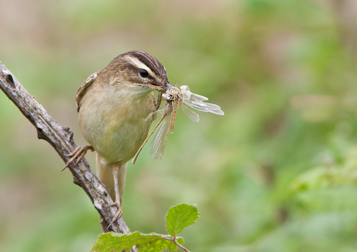 Photograph Mouthful 2 by Lea Roberts on 500px