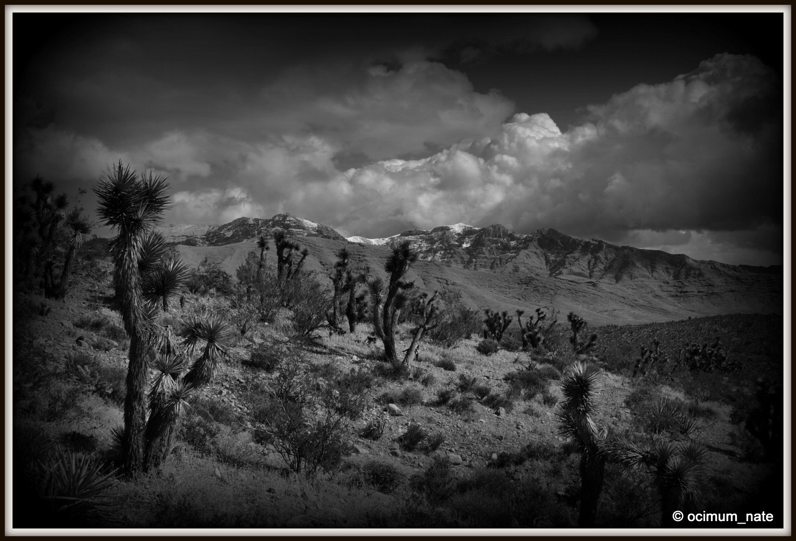 Photograph Joshua Tree Forest with Snowy Peaks by Nate A on 500px