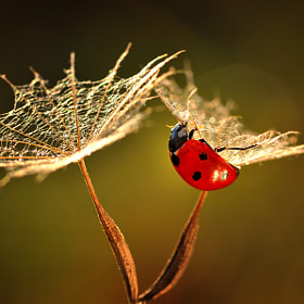 In The Golden Hour by Magda Wasiczek (MagdaWasiczek1)) on 500px.com
