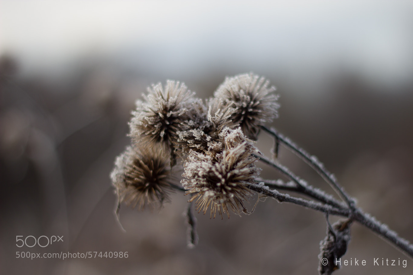 Photograph Winter plant by Heike Kitzig on 500px