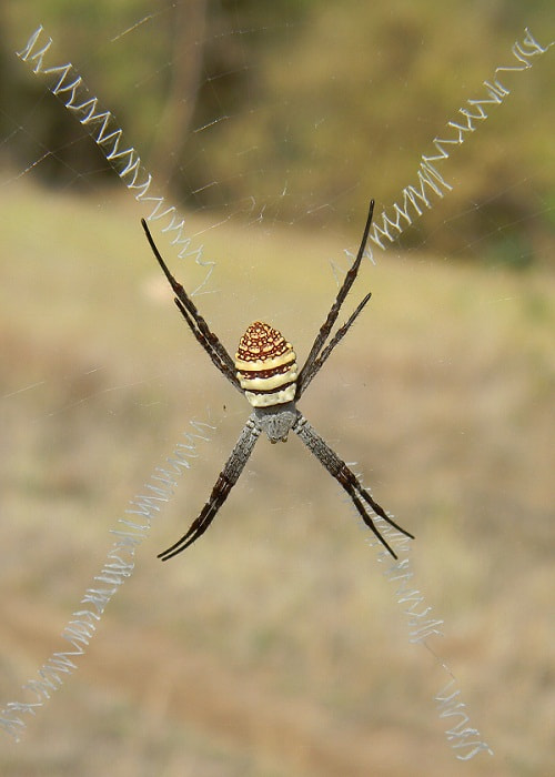 Photograph Signature spider by Milind Mangare on 500px