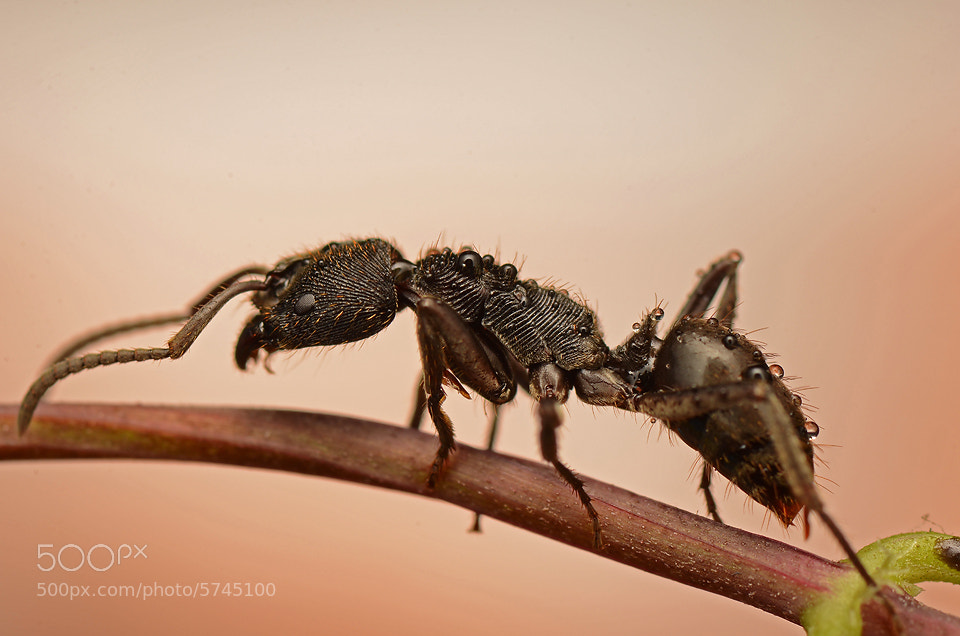 Photograph black ants by Simon Shim on 500px